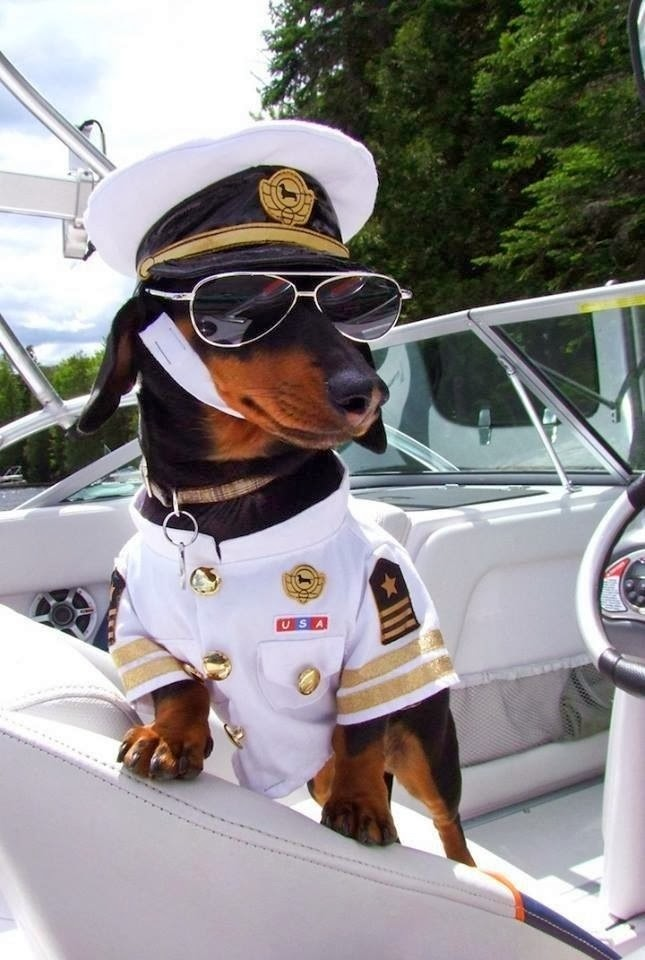 Cute dogs (50 pics), dog pictures, dog wears captain costume in a boat