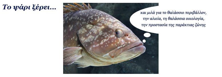 το ψάρι ξέρει...