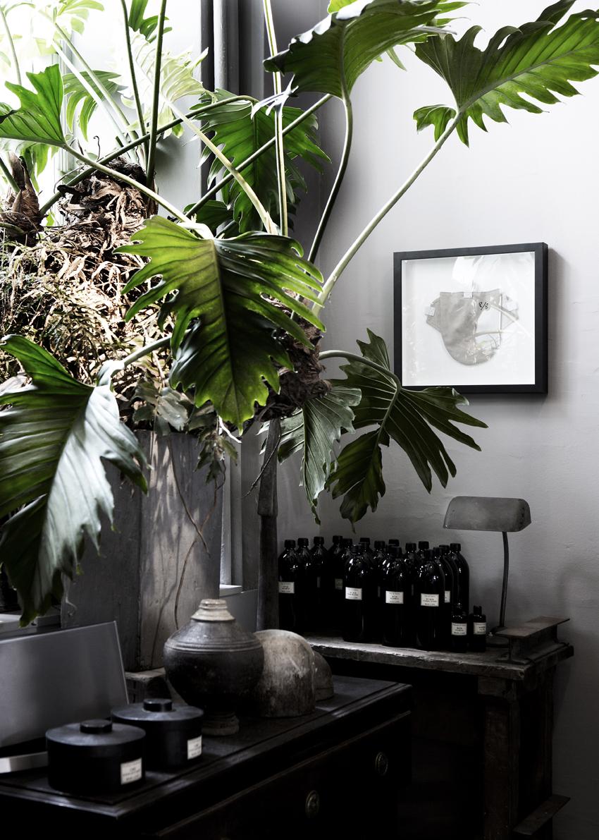 plantes vertes anna g. Black Bedroom Furniture Sets. Home Design Ideas