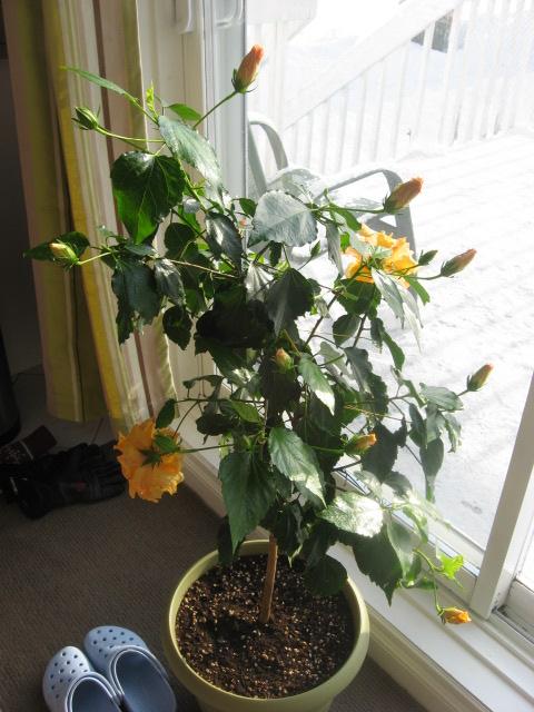 horticultoth rapie fleurs d 39 hiver. Black Bedroom Furniture Sets. Home Design Ideas