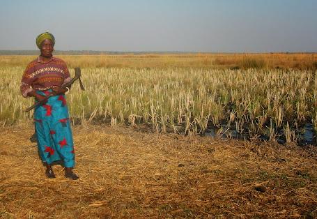 Aunty with axe near the rice fields