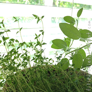 herb garden:  thyme and sage