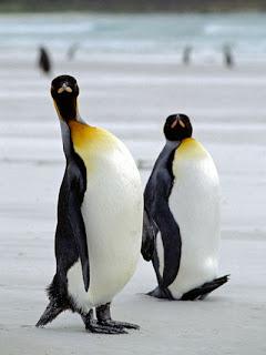 Foto Pinguin Bergaya
