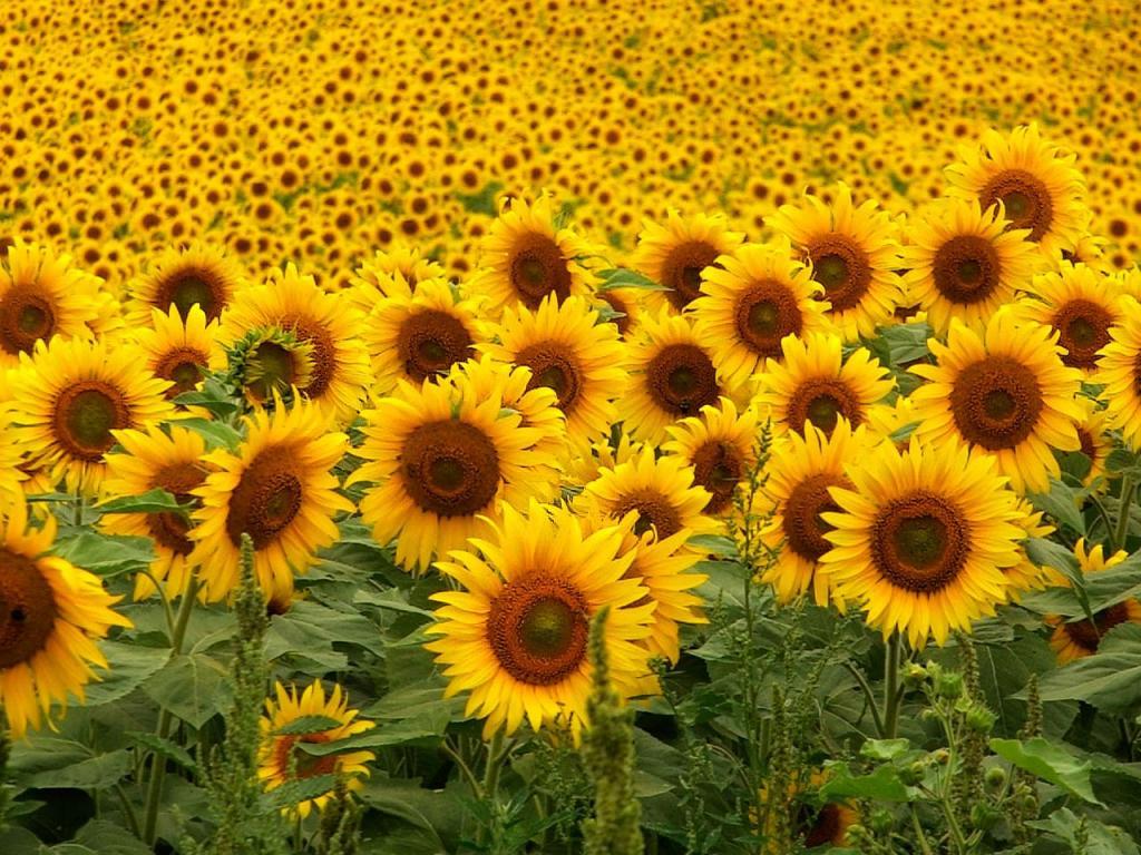 Imágenes de flores y plantas