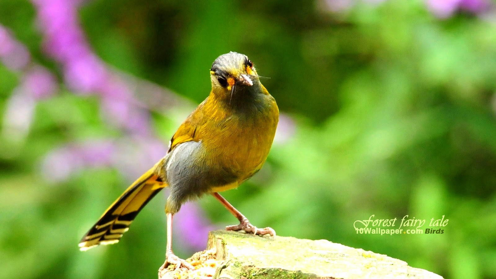 Dawn Of Battle: YELLOW BIRD