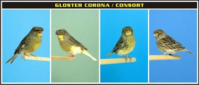 http://2.bp.blogspot.com/-2X2JrNjxmjQ/T7854fYg2XI/AAAAAAAAADs/lWYHcLY8UtA/s1600/Closter+Corona+consort.jpg