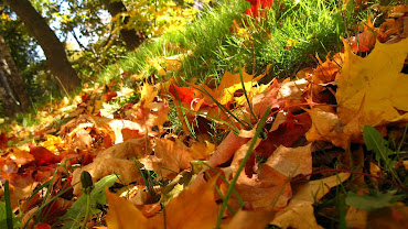 #7 Fall Leaves Wallpaper