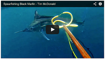 Tim Mc Donald Spearfishing Marlin Australia