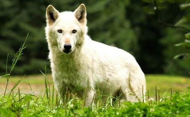 Hewan Yang Paling Banyak Membunuh Manusia Setiap Tahunnya