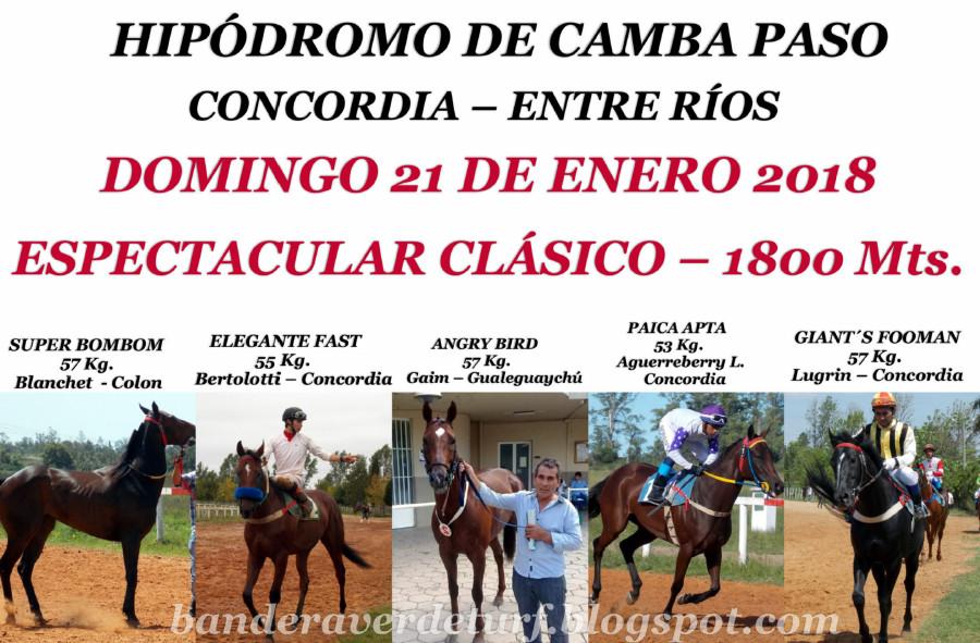 CAMBA PASO CLASICO 1800