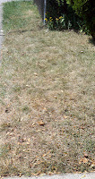 Lawn dying after spraying with organic RoundUp alternatives.