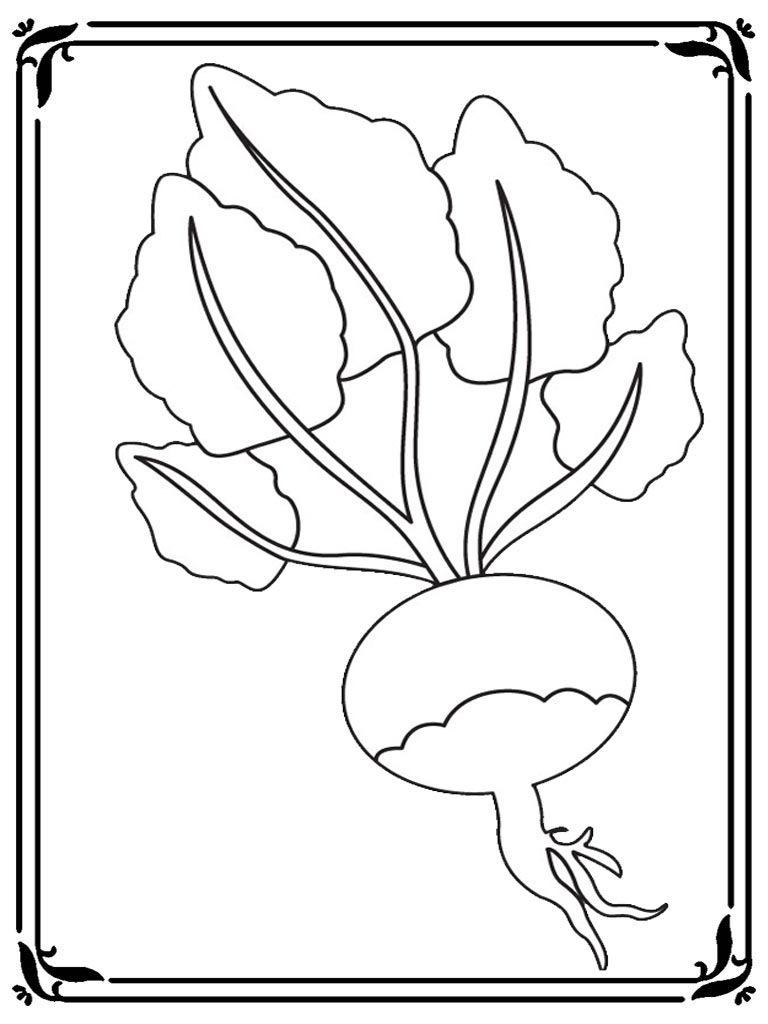 Free printable turnip coloring pages realistic coloring for Turnip coloring page