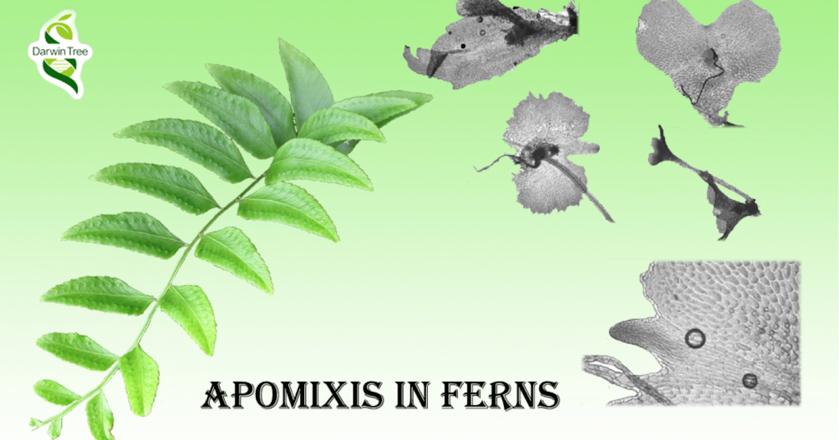 no seeds  no fruits  no flowers  no problem   apomixis in