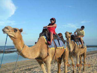 Menikmati Pantai Di Atas Unta Dengan Bali Camel Safari