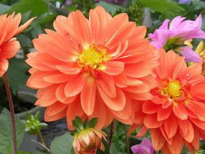マンション 賃貸 大阪 Blog のダリア