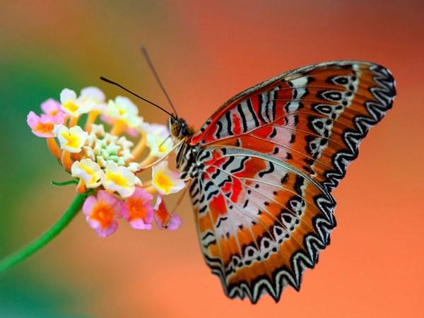 Best Butterfly Wallpaper Download Free HD