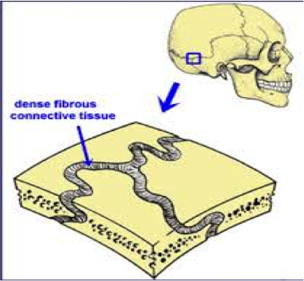 Ders Notlari Eklemler The cartilaginous union of the anterior end of the basilar portion of the occipital bone with the posterior surface of the body of the sphenoid bone. ders notlari blogger