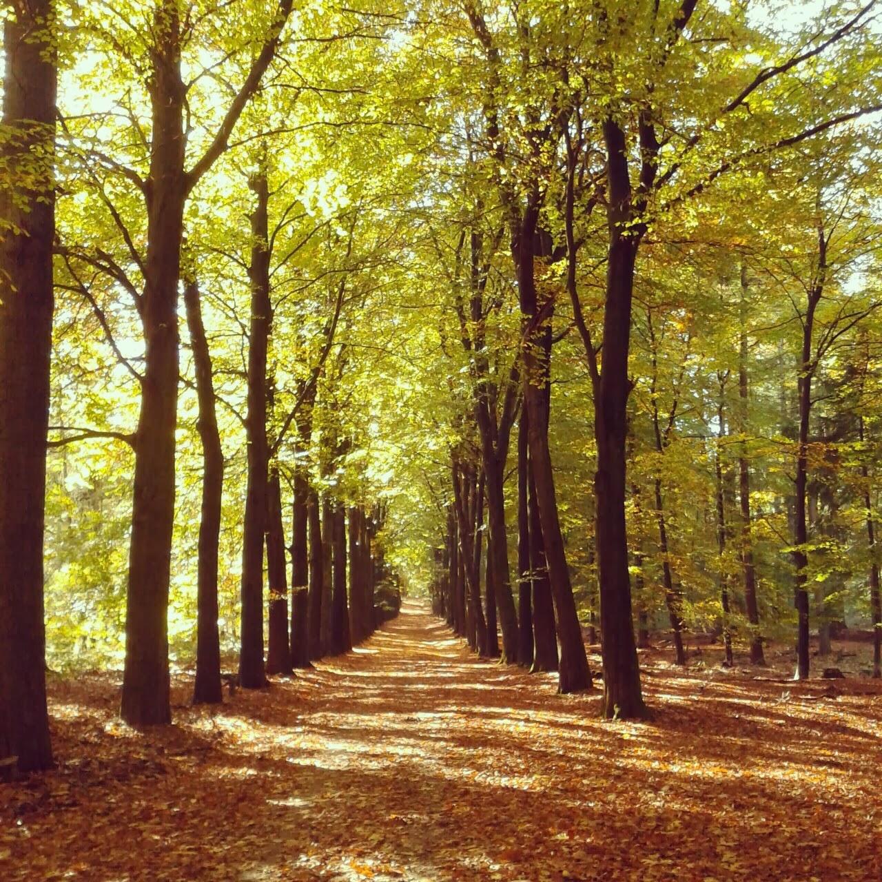 Girl Meets World: Fall Inspiration