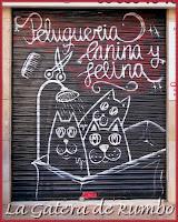 Gatos en peluquería canina-felina Na Jordana de Valencia