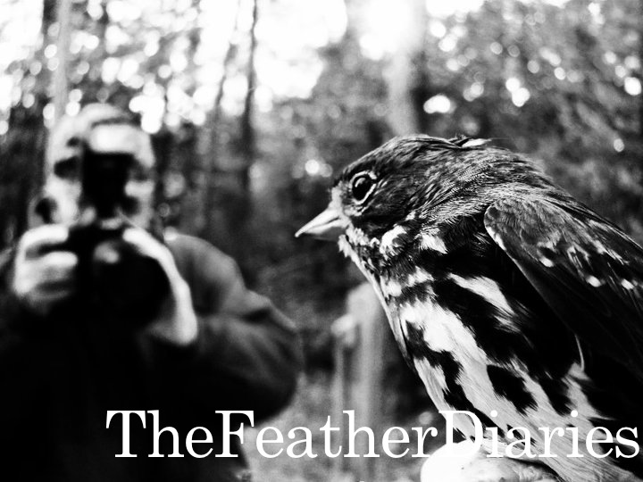 The Feather Diaries