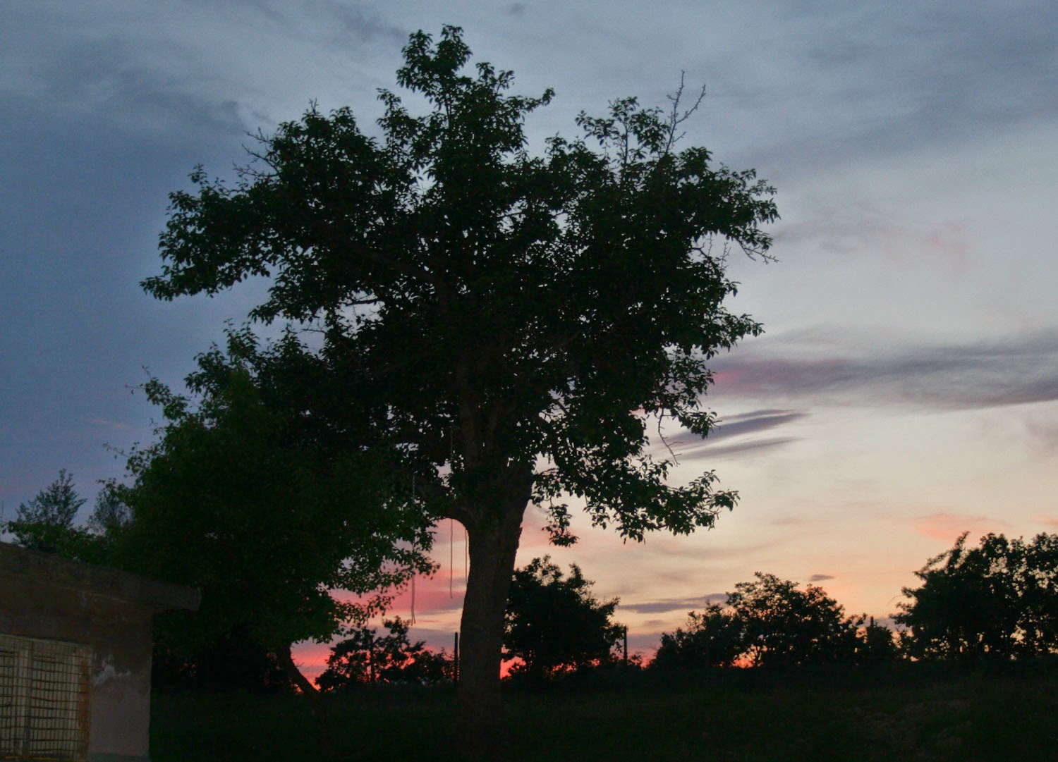 Sunset behind my favourite tree