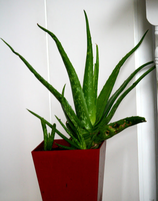 Aloe Vera amp; Other Air Improving Plants