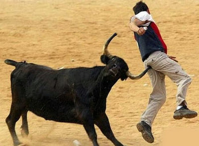 Funny Bull Chasing Photos Images Funny Cute Animals