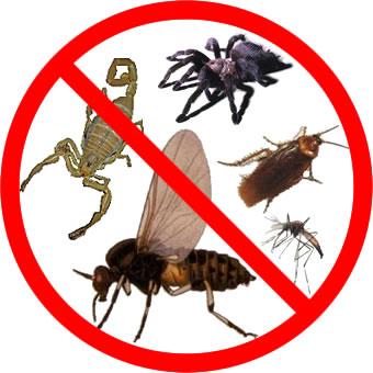 Mosquitos plagas - Que hacer contra las cucarachas ...