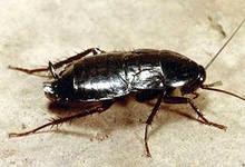 завелись тараканы