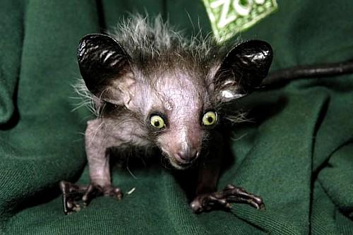 Image Gallery most weird animals
