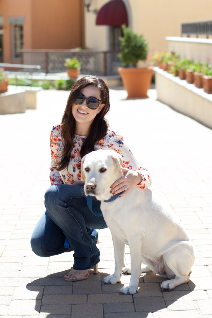 karen walker sunglasses, bootcut denim, labrador retriever