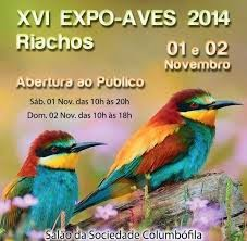 XVI EXPO AVES RIACHOS