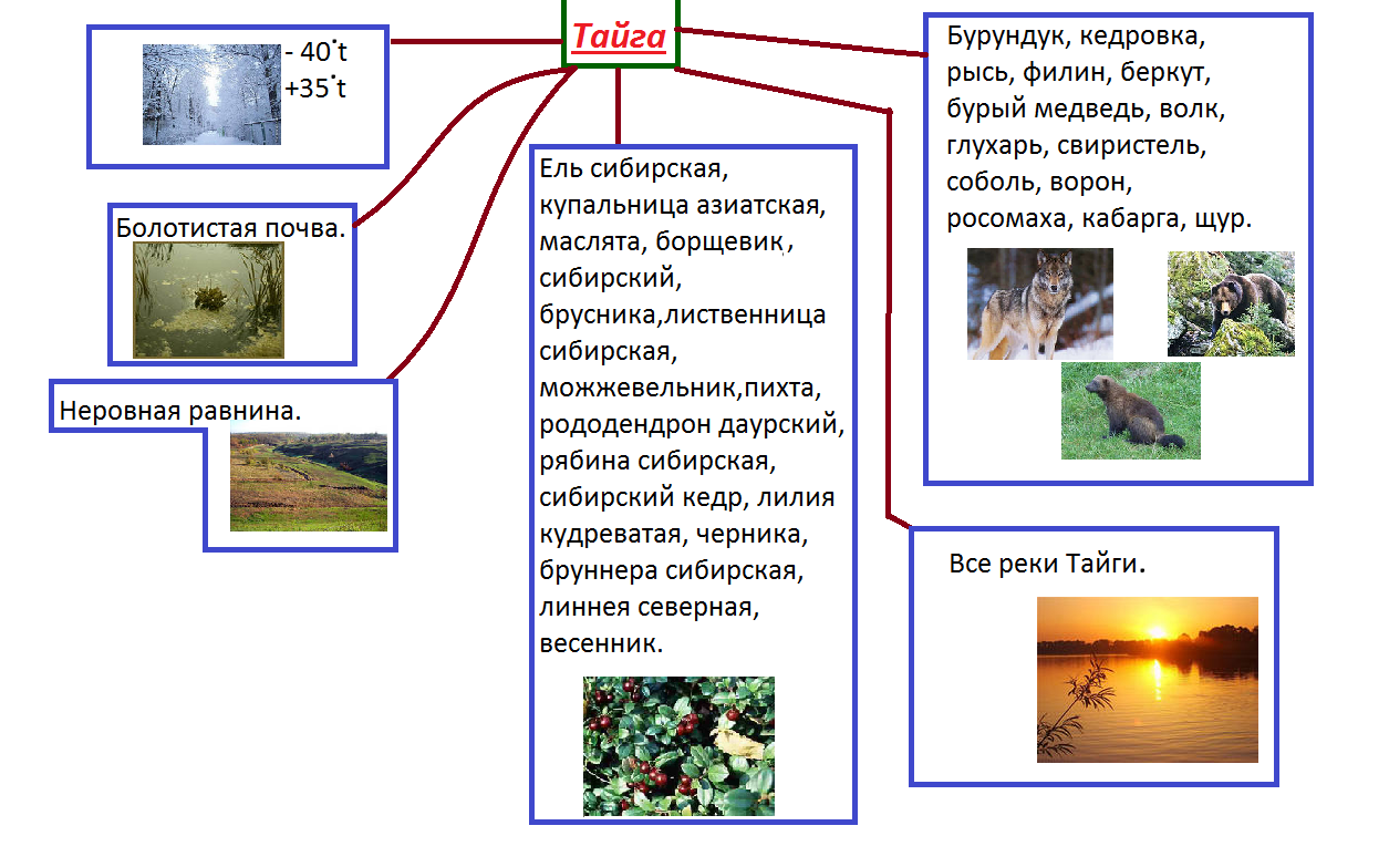 картинки тайги и схемы питания