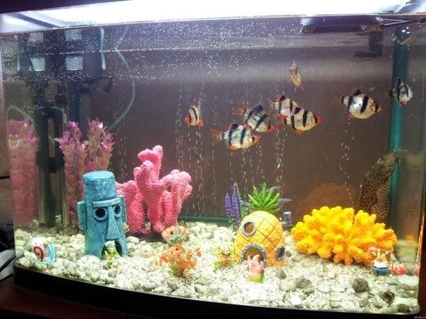 Украшения для аквариума своими руками фото