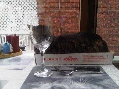 chat, table, coupe de vin, couverts