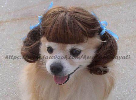 girlish doggy