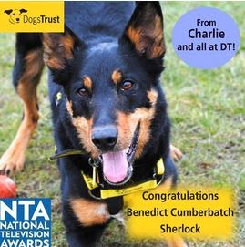http://www.dogstrust.org.uk/rehoming/dog/1037596/charlie#.Ut_5OLTFIr0