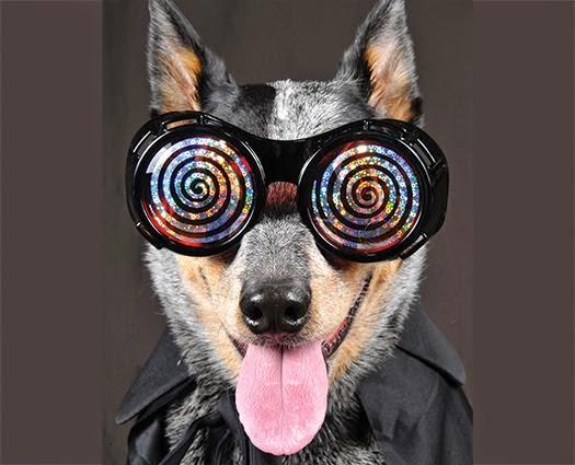 hayvanları hipnoz etme, hipnoz etme, hayvan hipnozu