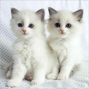 Foto Kucing Lucu Imut dan Menggemaskan 01