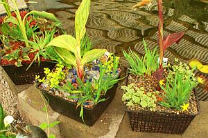 Plantas, Riego y Cuidados