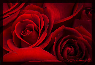 5 Encantadoras Imagenes de Rosas Rojas con Frases de