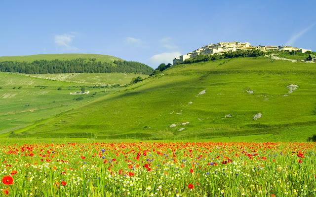 Montanas, Bosques y Flores de Amapolas - Italia