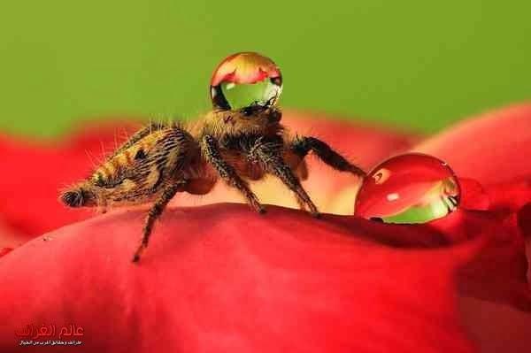 صور عناكب، الغرائب