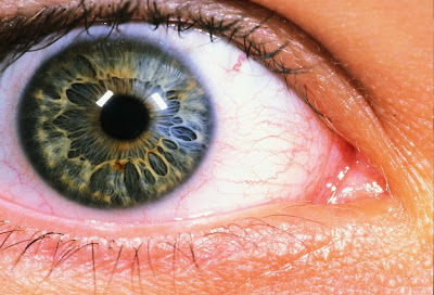 Close-up Photographs of the Human Eye