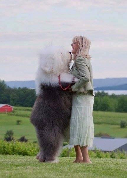 10 Dogs Who Don't Realize That They Are Huge-6 of 10