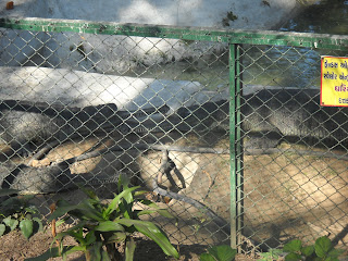 crocodile ahmedabad kankaria zoo