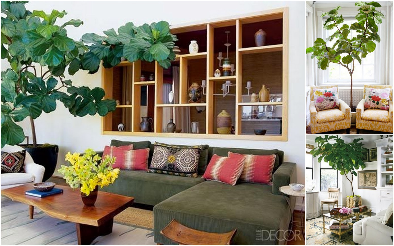 Mintsix the fabulous fiddle leaf fig for Room decor ideas with plants