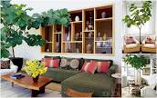#12 Indoor Plant Decoration Ideas