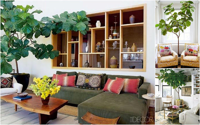 #12 Indoor Plant Decoration Ideas