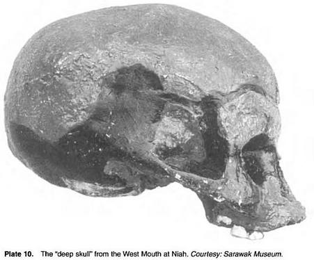 HOMO SAPIENS 的头颅骨